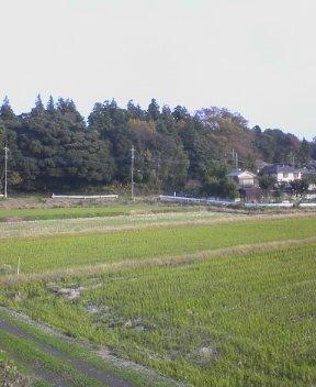 近所の田んぼ