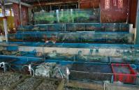 西貢海鮮棚