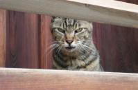 ネコ(2)