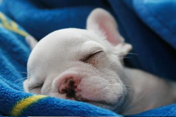 あかちゃんゴローの寝顔