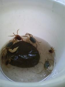 思い出の蟹