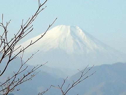 陣馬山 うどん(富士見茶屋)