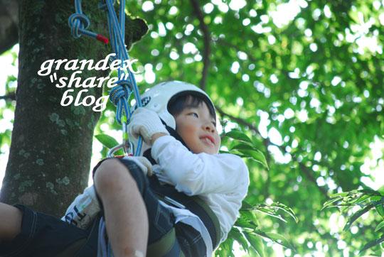 101023_share_treeing_07.jpg