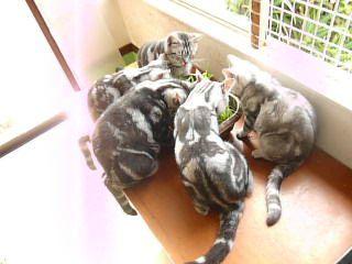 2010秋猫草と5猫