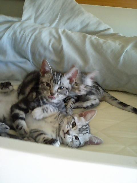 冬の3子猫