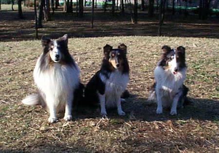 3dogs20001101.jpg
