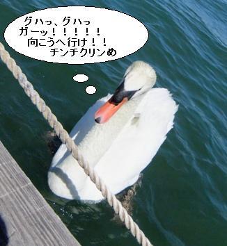 fuji2DSCF1381.jpg