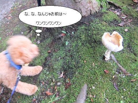 mushroomDSCF2778.jpg