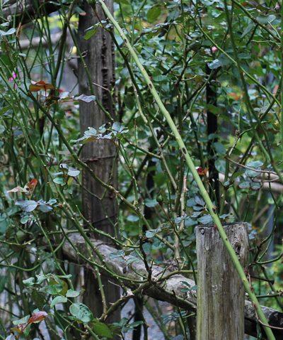 美山木の柵