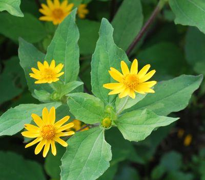 茅葺き素朴な花