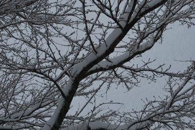 0116雪枝