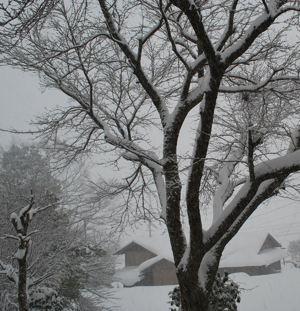 0116雪前家