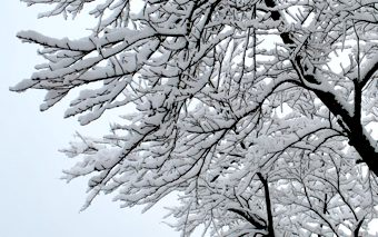ひな祭り雪