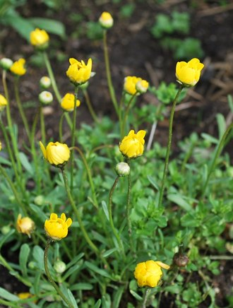 黄色 小さい花はな