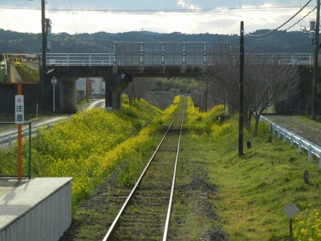 2011/3/27 城見ヶ丘にて