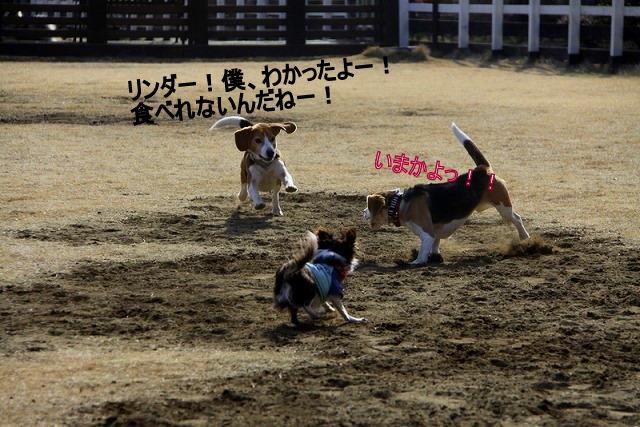10_20110126191225.jpg
