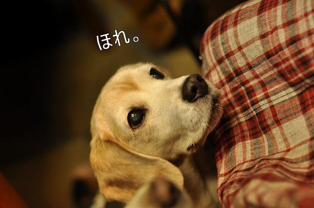 10_20110201224439.jpg