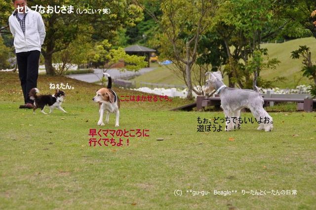 11_20100514163812.jpg