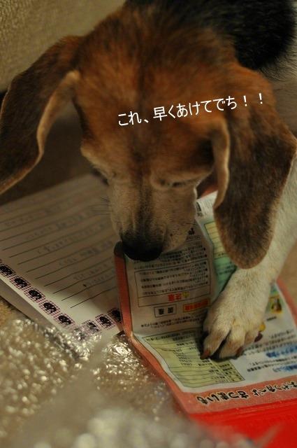 11_20101101224357.jpg