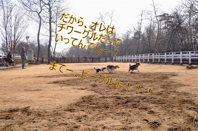 11_20110126191225.jpg