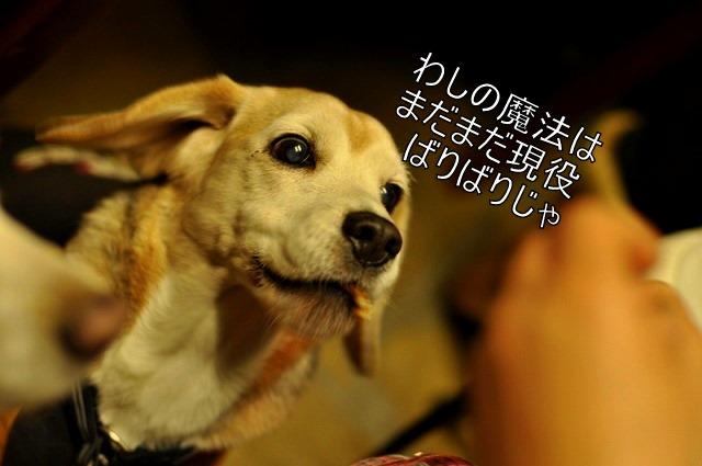 11_20110201224439.jpg