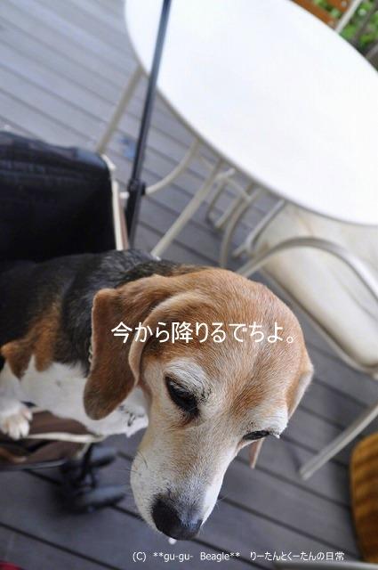 12-1_20100516220157.jpg
