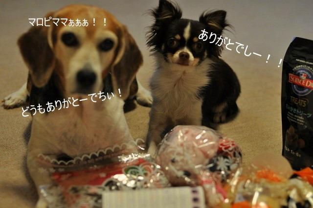 12_20101101224357.jpg