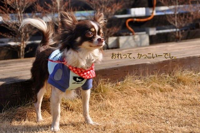 12_20110126191225.jpg