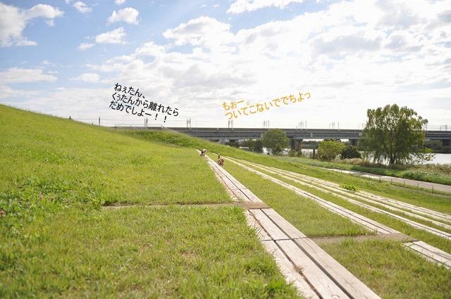 13_20100930113219.jpg