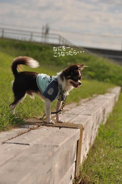 15_20100930113326.jpg