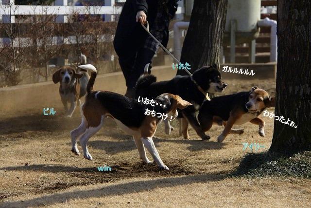 15_20110125162541.jpg