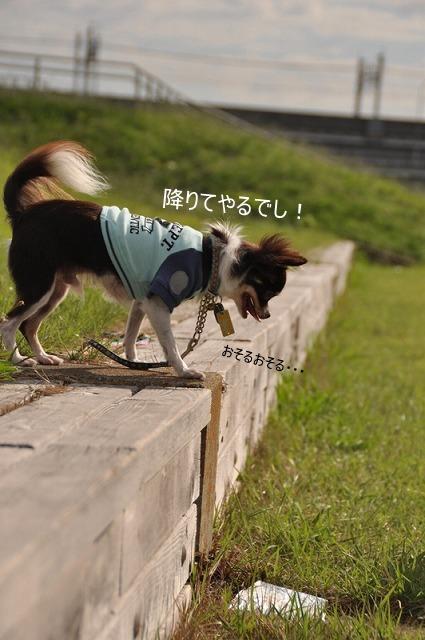 16_20100930113340.jpg