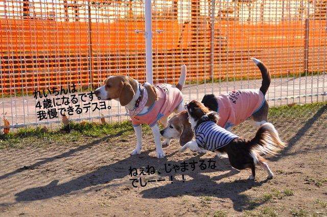 17_20110123233007.jpg