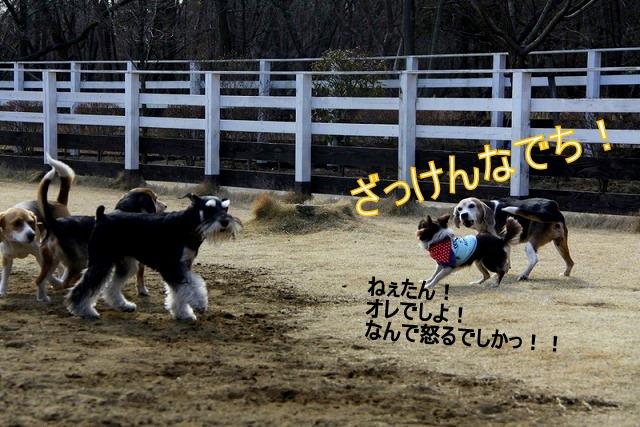 17_20110126191541.jpg