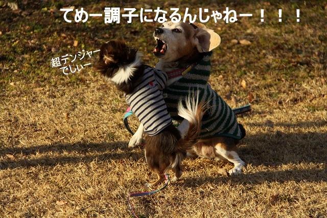 18_20110110111439.jpg