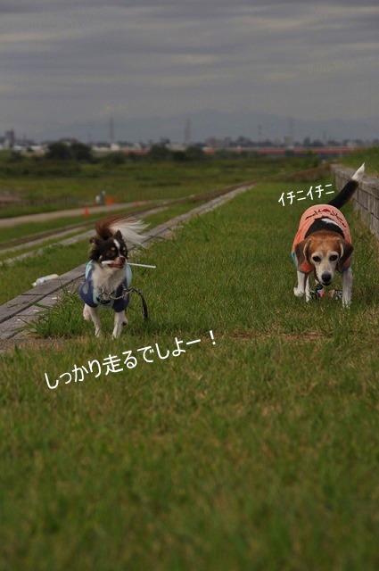 19_20100930113512.jpg