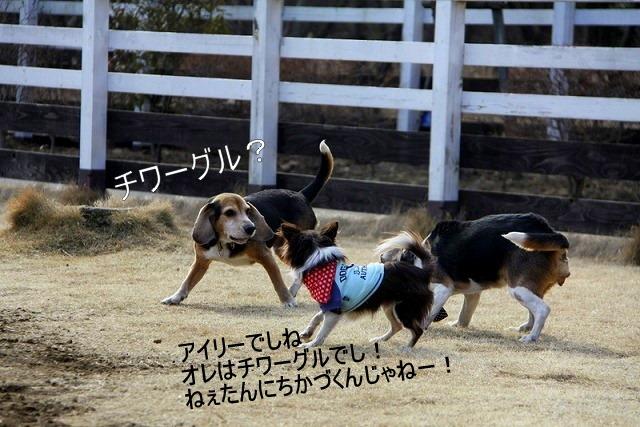 19_20110126192053.jpg
