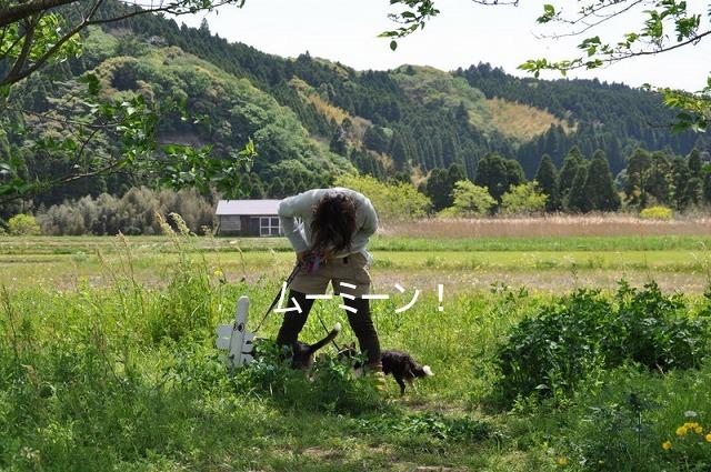 1_20100510121530.jpg