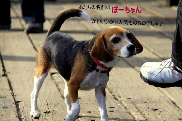 1_20110127214011.jpg