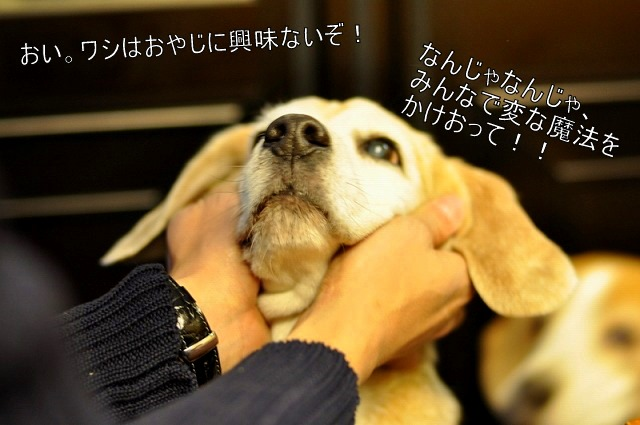 20_20110201225025.jpg