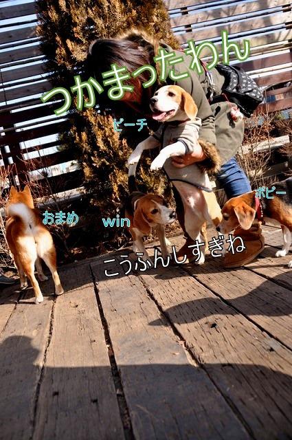 21_20110125164230.jpg