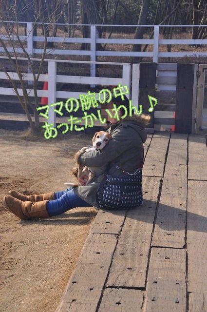 22_20110125164230.jpg