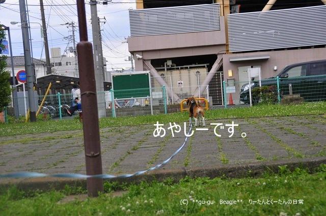 23_20100516221333.jpg