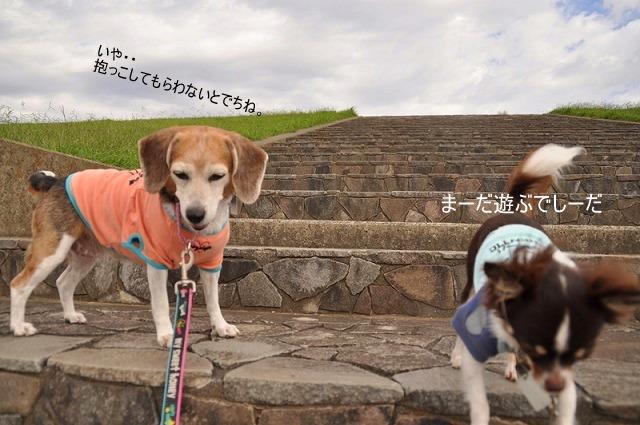 24_20100930113834.jpg