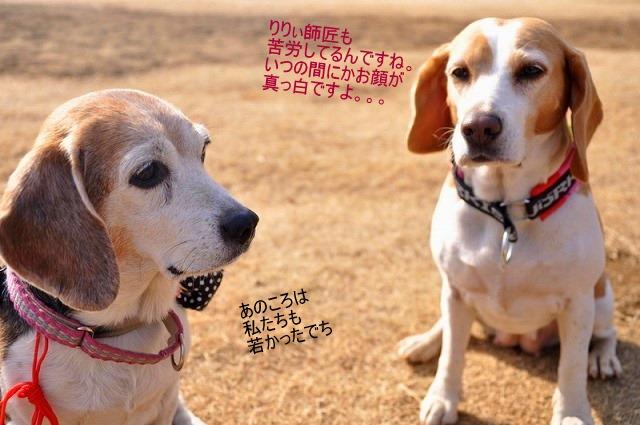 24_20110126192052.jpg