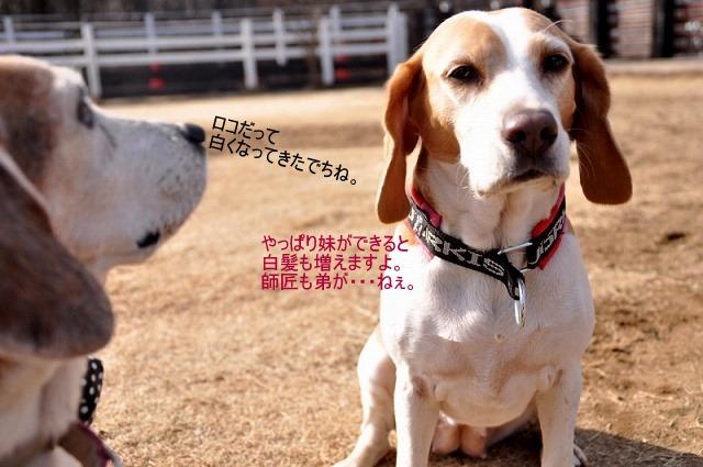 25_20110126193242.jpg