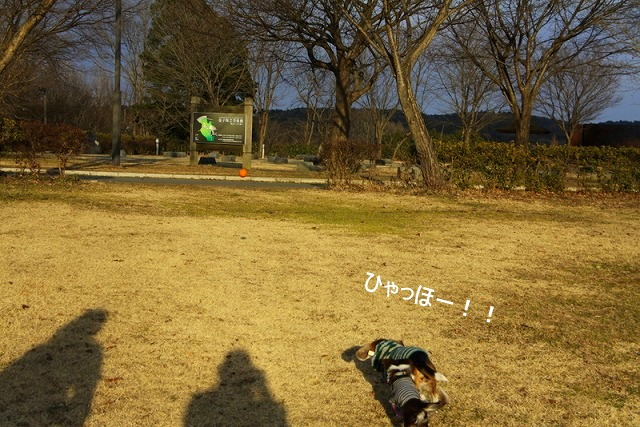 26_20110110112015.jpg