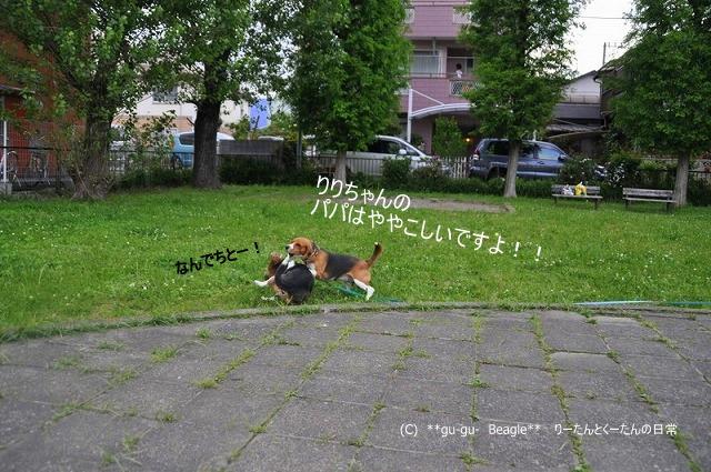 28_20100516221725.jpg
