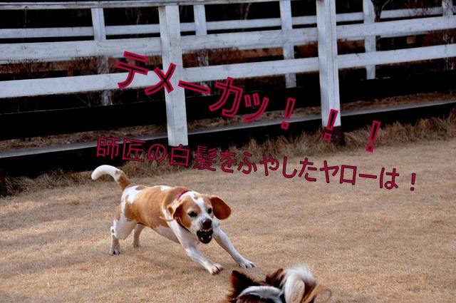 28_20110126193241.jpg