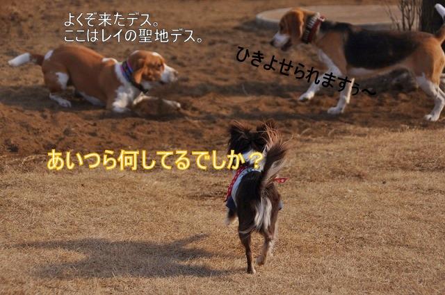 29_20110128131345.jpg